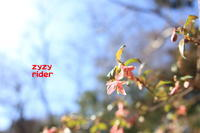 日射しいっぱい - ジージーライダーの自然彩彩