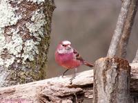 Bird-watching hike in Kitamusashi - Hike in and around Tokyo