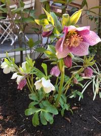 季節毎のガーデンケア - 花の庭づくり庭ぐらしガーデニングキララ