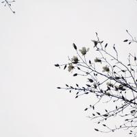 "p846 "" 年年歳歳花相似 ""松の川緑道2018年3月16日 - 侘び寂び"
