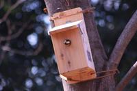ヤマガラの巣箱。大泉さくら運動公園のカワヅサクラ - 子猫の迷い道Ⅱ