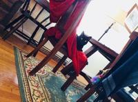 ねこ: たまには赤 - にゃんこと暮らす・アメリカ・アパート(その2)