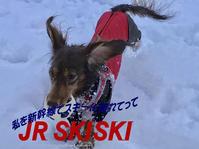 18年3月16日 冷たい雨…行ってきます! - 旅行犬 さくら 桃子 あんず 日記