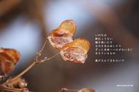 歳だなんて言わないで - 花の咲み、花のうた、きらめく地上 ―― photo&poem gallery kanon