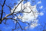 白梅*を愛でながら♪ - FUNKY'S BLUE SKY