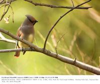 2018.3.10(2) - 鳥撮り遊び