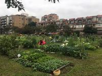 台北の家庭菜園 - 菜園のある暮らし