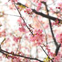 春の模様替え! - 「わ」が綴る日記