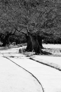 これを雪道と見るか否かで季節が変わる - かな坊の独り言