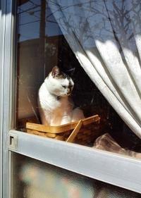 うち猫・元うち猫 - ないものを あるもので