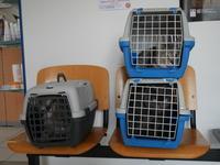 ぷぅたんがもしヒトだったならば120歳 - 『ココんちの (3+1)+(1+1+1) 猫と一犬のたわごと』 6 Pitchouns et 2 Pitchounettes