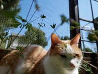 夏子のくまホーム - ご機嫌元氣 猫の森公式ブログ