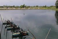 Thailand #4 - Bucerium