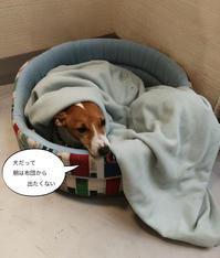 今日の犬カフェ - フィレンツェ田舎生活便り2