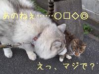 まとめて、すごい♪ (^o^) - 犬連れへんろ*二人と一匹のはなし*
