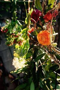 三月日記:春の珍事 - 世話要らずの庭
