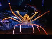 サンシャイン水族館~ゾクゾク深海生物2018:冷たい海 - 続々・動物園ありマス。