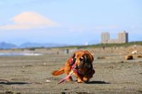 海散歩。。。とメダカ♪ - 湘南気まま生活♪