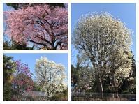 春爛漫!花粉満々! - Otonari工房