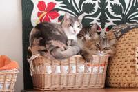 引っ張るつもりはなかったですが - きょうだい猫と仲良し暮らし