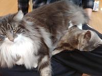 のっしり - 猫に目薬