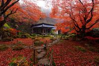 滋賀の紅葉2017 秋色に染まる教林坊 - 花景色-K.W.C. PhotoBlog