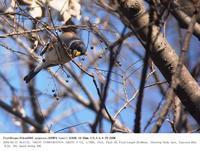 2018.3.17(1) - 鳥撮り遊び