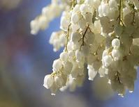 春一番は。。。 - 万願寺通信