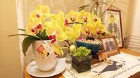 我が家の胡蝶蘭 - 「福田書塾」福田香陽のブログ