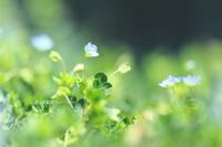 春の午後 - 花々の記憶    happy_momo