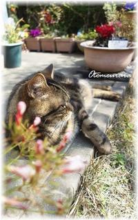 Happy Caturday (=^・^=) - 日々楽しく ♪mon bonheur