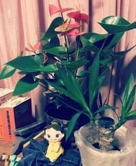 観葉植物 - ワタシ流 暮らし方   ~建築のこと日常のこと~