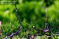 春が来た - GOOD LUCK!