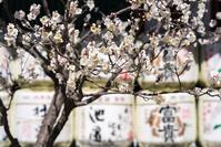 春本番 - - 光景彡z工房 - ◇ SeasonII ◇