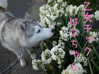 花はな通信(^o^) - 犬連れへんろ*二人と一匹のはなし*