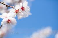 3月の花色々♪ - Lovely Poodle