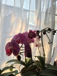 家の花 - (鳥撮)ハタ坊:PENTAX k-3、k-5で撮った写真を載せていきますので、ヨロシクですm(_ _)m