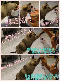 一昨日はHappy Caturday☆2018年3月17日(土) - ちょこ家の日々