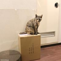 また寒くなった - 賃貸ネコ暮らし|賃貸住宅でネコを室内飼いする工夫