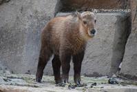 ナズナちゃん VS カラス - 今日ものんびり動物園