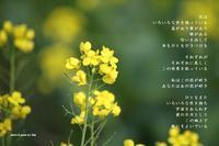 個性 - 陽だまりの詩
