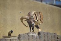 多摩動物園散歩 - 動物園へ行こう