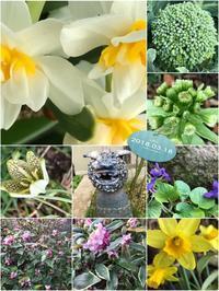 所どころに春到来「花花が・・・草草が・・・春が来~た~♫」編 - 岡山の実家・持家・空き家&中古の家をリノベする。