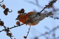 特徴的なくちばし♪ - 北の大地で野鳥ときどきフライフィッシング