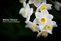 白い花 - GOOD LUCK!