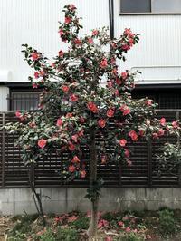 Spring has come - へごきゃらにゃっぺ