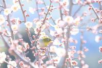 ウメジロー - 気持ちFHOTO