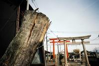 通り掛かった蒲原神社で - Yoshi-A の写真の楽しみ