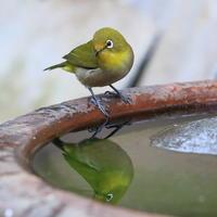 夕暮れの庭 - TACOSの野鳥日記