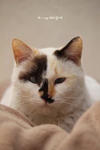 家猫になった マロンちゃん - a cozy little life